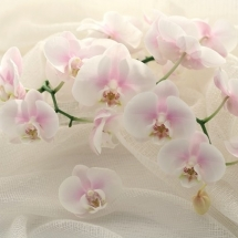 flower-گل (301)
