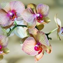 flower-گل (302)