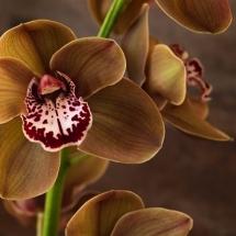 flower-گل (304)
