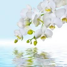 flower-گل (305)