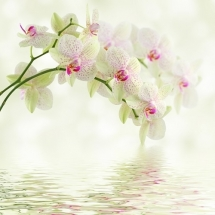 flower-گل (306)