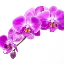 flower-گل (307)