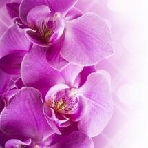 flower-گل (308)