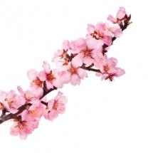 flower-گل (309)