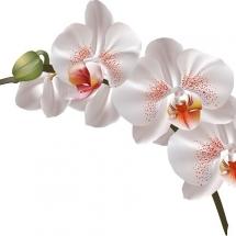 flower-گل (31)