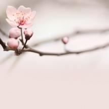 flower-گل (310)