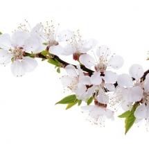 flower-گل (311)