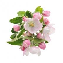 flower-گل (312)