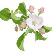 flower-گل (313)