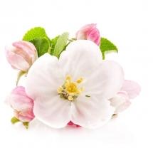 flower-گل (314)