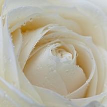 flower-گل (315)