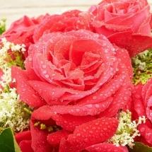 flower-گل (316)