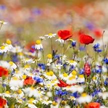 flower-گل (317)