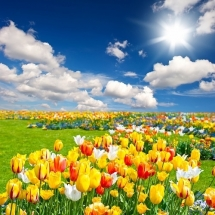 flower-گل (318)