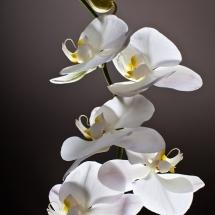 flower-گل (319)