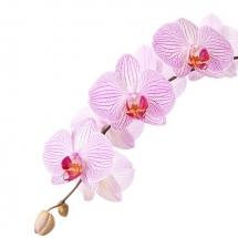 flower-گل (32)