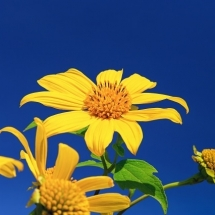 flower-گل (320)