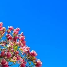 flower-گل (321)