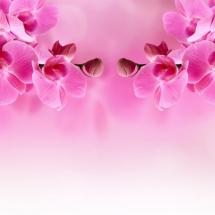 flower-گل (324)