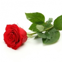 flower-گل (325)