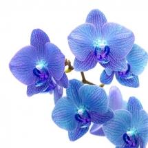 flower-گل (326)