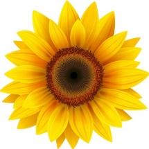 flower-گل (327)