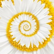 flower-گل (328)
