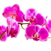 flower-گل (33)