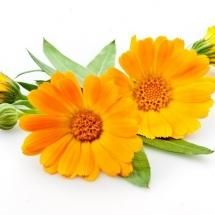 flower-گل (331)