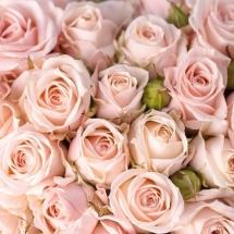 flower-گل (333)