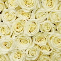 flower-گل (334)