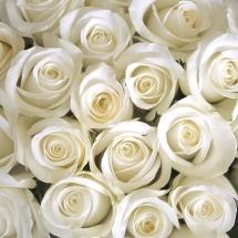 flower-گل (335)