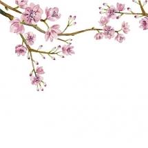 flower-گل (337)