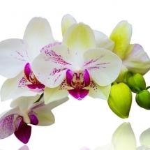 flower-گل (338)