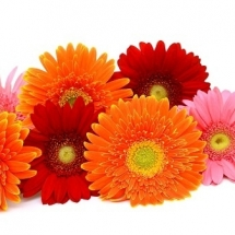 flower-گل (339)