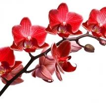 flower-گل (34)