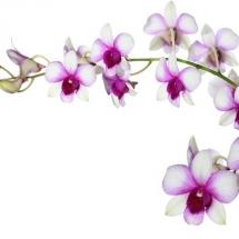 flower-گل (341)