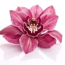 flower-گل (342)