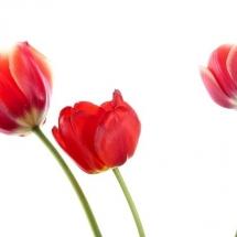 flower-گل (344)
