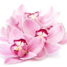 flower-گل (345)