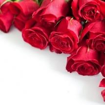 flower-گل (346)