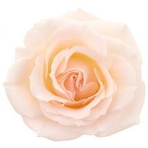 flower-گل (347)