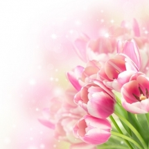 flower-گل (348)