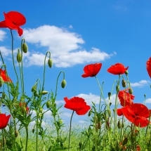 flower-گل (349)