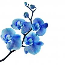 flower-گل (35)