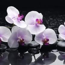 flower-گل (350)