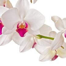 flower-گل (351)