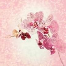 flower-گل (352)