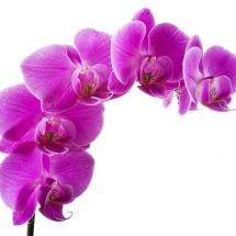 flower-گل (354)