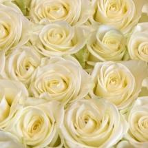 flower-گل (355)